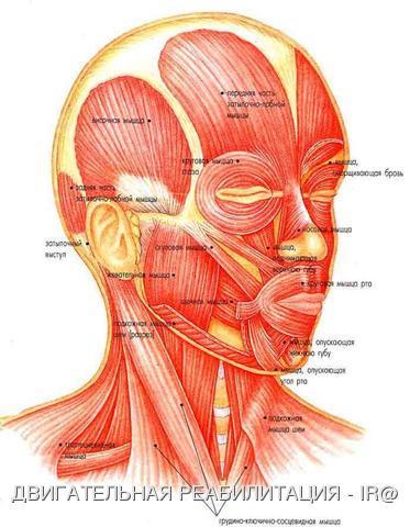 От массажа расслабляются мышцы