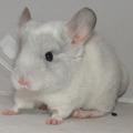Маленький белый сапфир