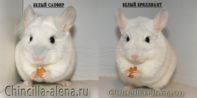 Белый сапфир и белый бриллиант. сравнение