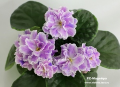 РС-Мадейра