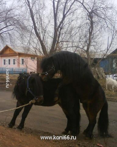 спаривание лошадей смотреть онлайн: